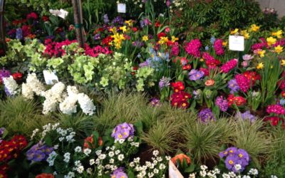 The Northwest Flower and Garden Show