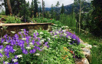 Gardeners Have More Fun: HIRING FULL TIME GARDEN/ LANDSCAPE FOREMAN